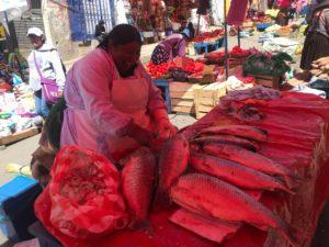 魚市場中南米