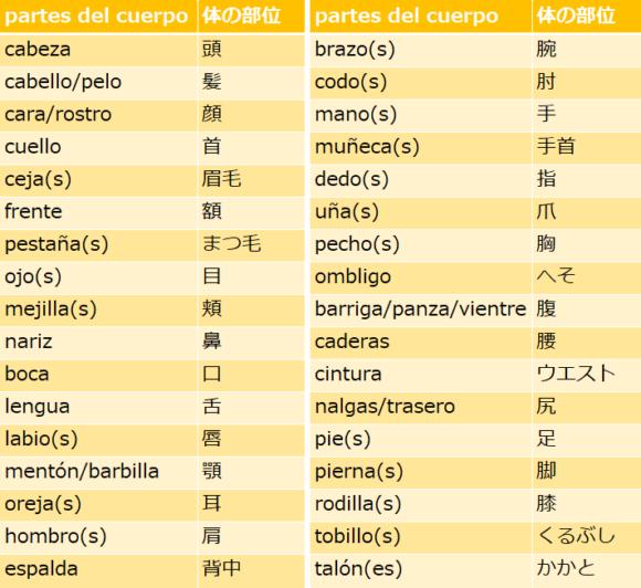 スペイン語で体の部位の名前